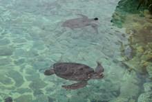 23.ラグーンにはたくさんのウミガメたちが泳いでました