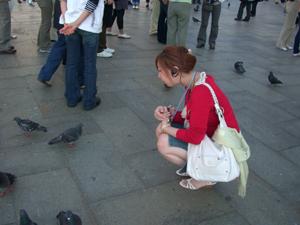 鳩がいっぱいでした。