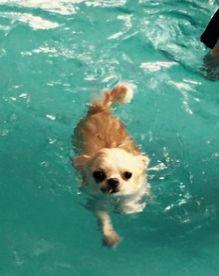 上手に泳げるようになりました